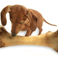 Prompt #159: Give a dog a bone