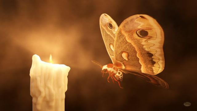 moth to a flame