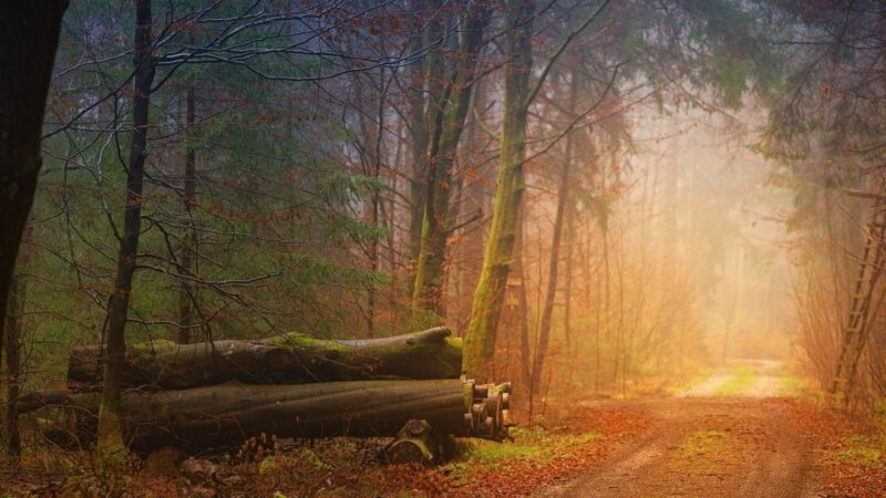 An image of a footpath in the woods, on an autumn late afternoon.