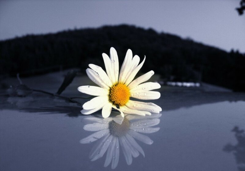 A dark image with a mountain in the background, water in the foreground and a bright white and yellow flower indicating spring is coming.