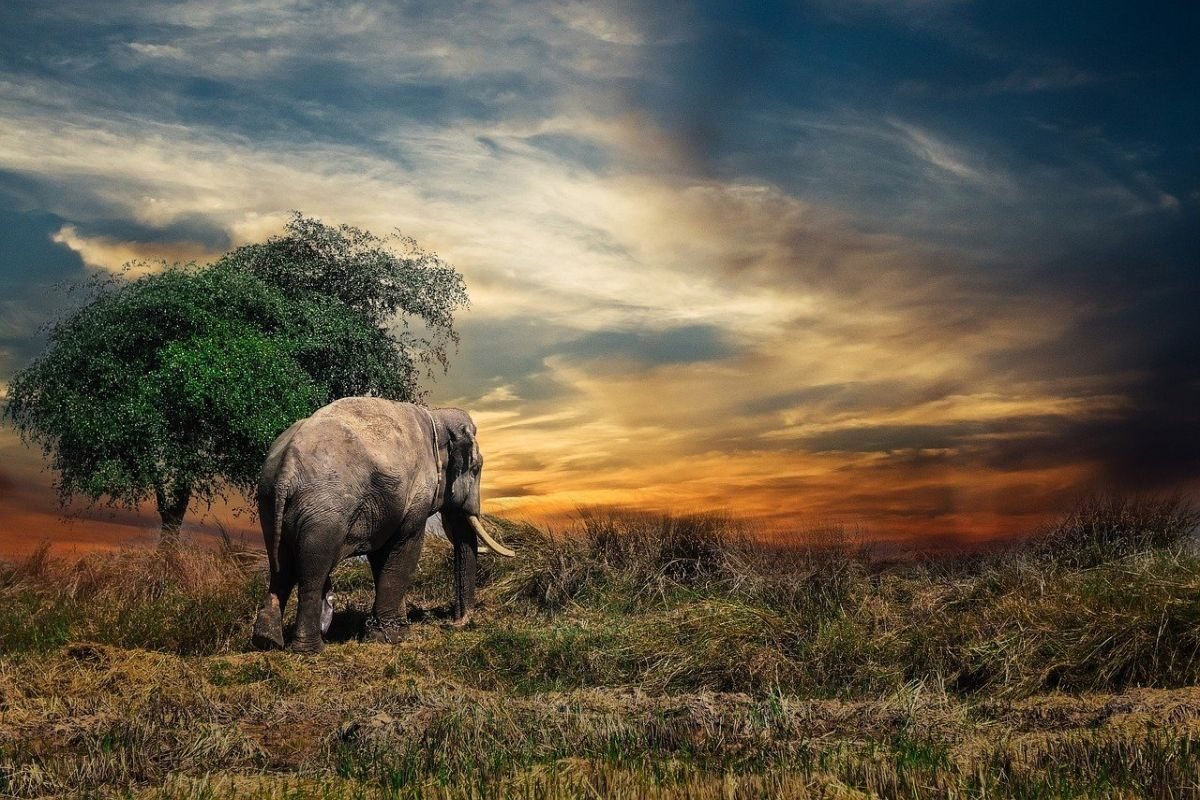 An image of an elephant in the wilderness to go with my post about spirit animals.