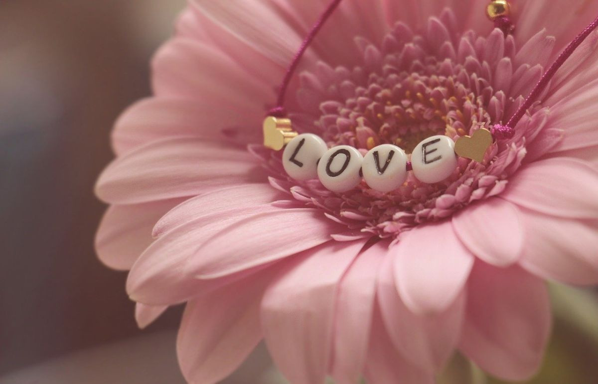 An image of a gerbera with the letters spelling Love inside the core, to go with my post about the lyrics of Chasing Cars by Snow Patrol.