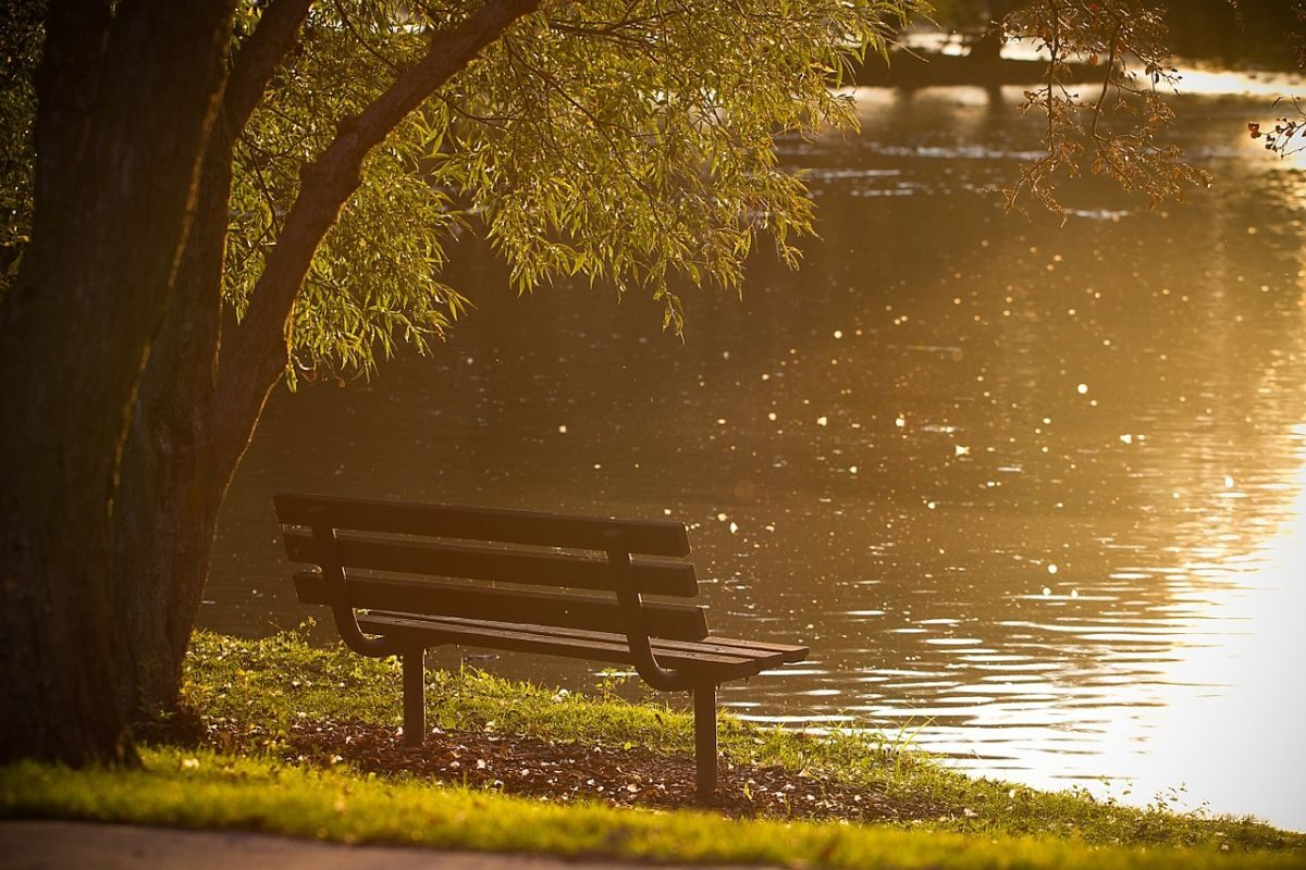 An image of a bench under a tree, overlooking the water, to go with my post about my real world being upside down.